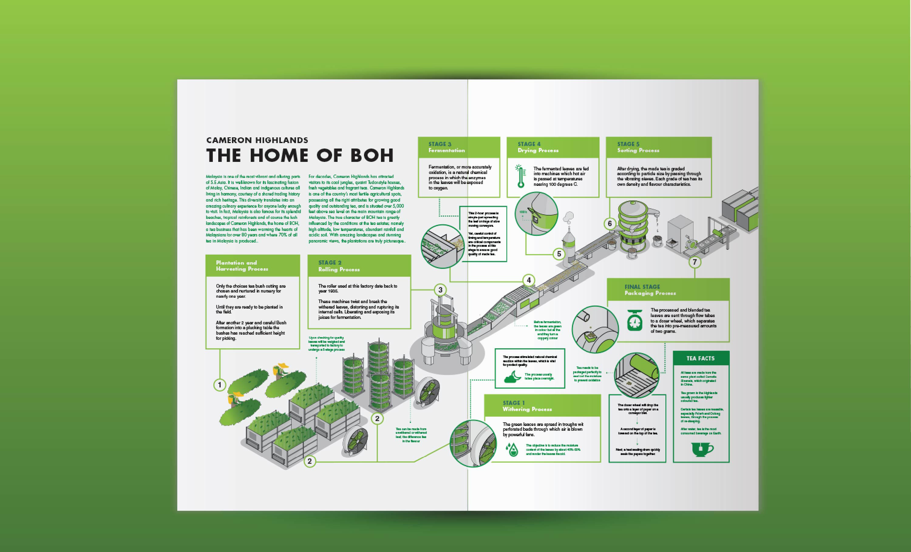 Boh tea Cameron highland infographic illustration